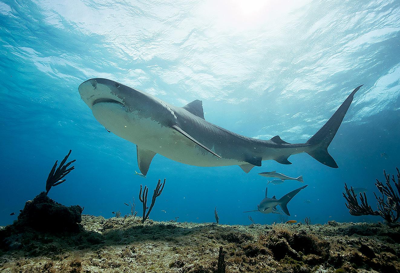 Sharks & I